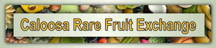 Caloosa Rare Fruit Exchange, Fort Myers, Lee County Florida, Tropical Fruits Trees Plants